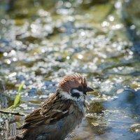жарко-купаться всем!!!! :: дмитрий посохин