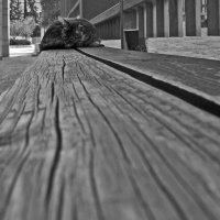 Консульская кошка :: Eugene *