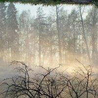 В старом парке. Туманное утро :: Юрий Цыплятников