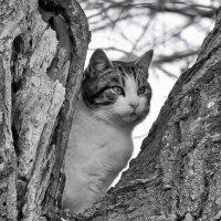 Высоко сижу, далеко гляжу ... :: Ольга Винницкая (Olenka)