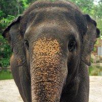 Слон :: Александр Гришин