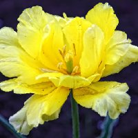 Желтый.... :: Марина Назарова