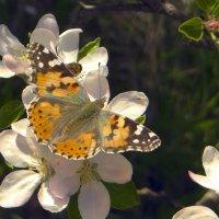 Друзья на празднике весны :: Лейла Новикова