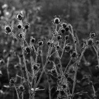 У травы- права на весну, на свет :: Ирина Данилова