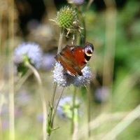 Бабочки. :: Руслан Грицунь