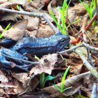 Царевна-лягушка. Авторы Саша и Натан :: Фотогруппа Весна.