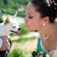 Можете поцеловать невесту :: Андрей Спиридонов