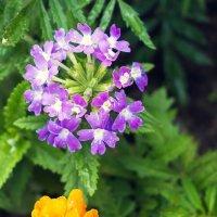 цветы :: Александр Ануфриев