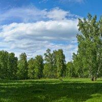Вот и лето :: Николай Мальцев