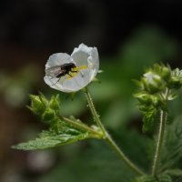 И мухам не чуждо прекрасное... :: Алексей Некрасов