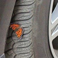 Бабочка с машиной :: Генрих Сидоренко