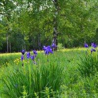 Лесные поляны :: Геннадий Ячменев