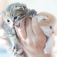 Котёнки) :: Татьяна Костенко (Tatka271)