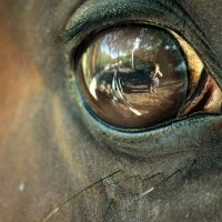 Глаз лошади :: Любовь Боевец