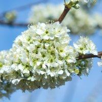 Весна :: Сергей Щербаков