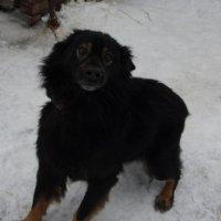 моя собачка) :: Евгения Степаненко