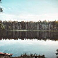forest2 :: Arina Kekshoeva