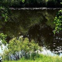 Лето. Затока Сожа в 50 км от Гомеля :: Анатолий Снежань (Степан Непан)