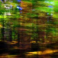SPEED FOREST COLOUR :: Rocker