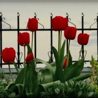 Цветы у храма! :: Владимир Шошин