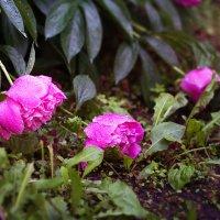 Этот сладкий запах дождя... :: Елена Соловьёва
