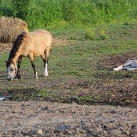 Лошадь и жеребёнок :: Aнна Зарубина