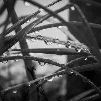 после дождя :: Slava Hamamoto