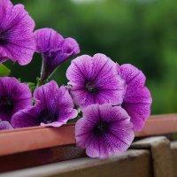 Прекрасный мир красок :: Наталья Солженикина