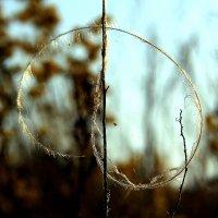 Зигзаг травы.. :: Юрий Стародубцев