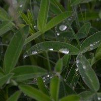 Rain drops :: Алексей Гимпель