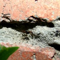 муравьи :: Владимир Сачко