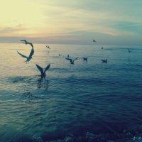Море :: Nikita Lev