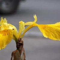 Цветок у дороги. Работа Саши. :: Фотогруппа Весна.