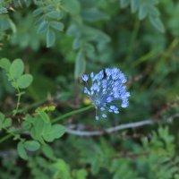 цветение :: Alima Назарова