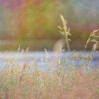 Summer :: kukuruza
