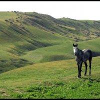 Лошадь с белым лицом :: Ахмед Овезмухаммедов