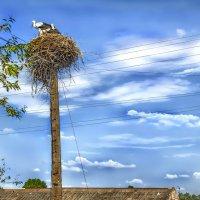 Львовские птахи... :: АндрЭо ПапандрЭо