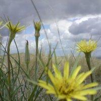 цветы :: Николай Провенко