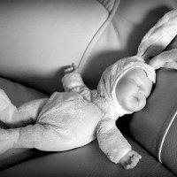 Спящий заяц! :: A. SMIRNOV