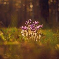 Сон-трава :: Аннета Матыцына