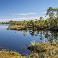 Озеро среди болот :: Юрий Сименяк