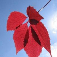 Красный лист :: Владимир Клюев
