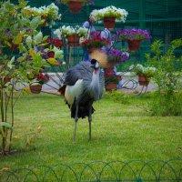 Птица с короной :: Алексей Гончаров