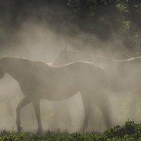 В пыли летнего дня :: Валерия заноска