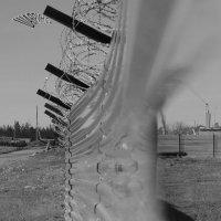 Дыра в заборе :: Сергей Шаврин