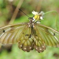 Бабочка :: Эдуард Закружный