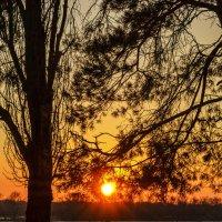 Закат за деревьями :: Богдан Петренко