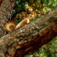 Коренная жительница леса :: Varvara Aravrav