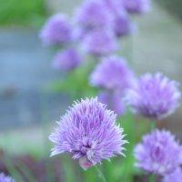 flower :: Greta St
