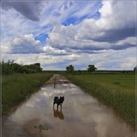 По дороге с облаками :: Андрей Дворников